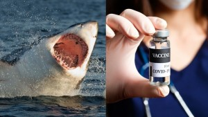 Covid Vaccine and killing sharks